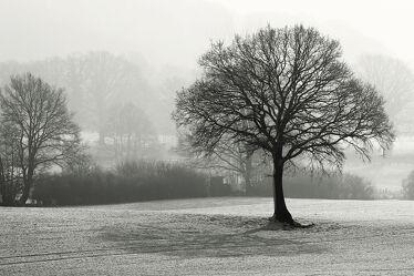 Bild mit Bäume, Winter, Schnee, Felder, Dunst, Schwarzweiß