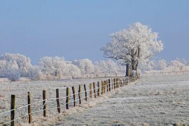 Bild mit Himmel, Bäume, Winter, Weiß, Blau, Felder, Wiesen, Raureif, Wolkenlos