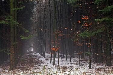 Bild mit Winter, Schnee, Wälder, Wald, Nadelwald, Laubwald, Unterholz, Arbeit, Schneisen