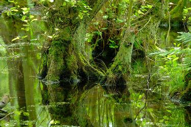 Bild mit Wasser, Gräser, Bäume, Gewässer, Seen, Blätter, Moor, Moos, Naturschutzgebiet, Polen