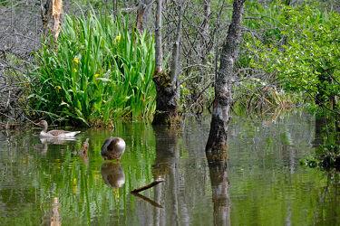 Bild mit Gräser, Bäume, Lilien, Reisen, Moor, Naturschutzgebiet, Polen, Ökoland, Vogelschutzgebiet
