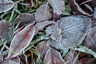 Bild mit Gräser, Winter, Blätter, Makro, nahaufnahme, Kälte, Frost, Raureif