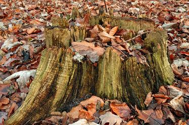 Bild mit Herbst, Wald, Blätter, Baumstumpf