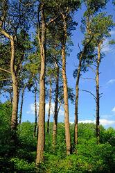 Bäume die gen Himmel wachsen