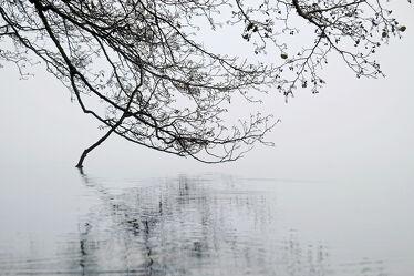 Bild mit Wasser, Gewässer, Nebel, See, Wassertropfen, Spiegelungen, Kälte, Äste, Zweige, Herbsttag