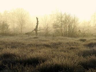 Bild mit Winter, Sonnenaufgang, Nebel, Kälte, Frost, Sonnenlicht, Rauhreif, Raureif, Dunst, Morgens
