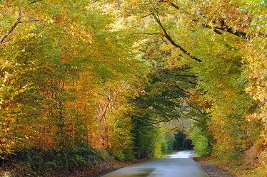Bild mit Bäume, Herbst, Blätter, Strasse, Sonnenschein, Licht, Gewitter, Regen, Nässe, Glätte