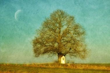 Bild mit Natur, Blumen, Frühling, Mond, Baum, Wiese, romantik, Bank, Retro, VINTAGE, romantisch, Bänke, harmonie, Phantasie, Traum, Kapelle, Sehnsucht, ländlich, gedanken, Erinnerung
