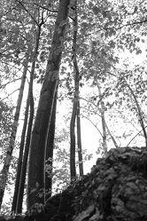 Wald, schwarz weiss