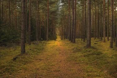 Bild mit Natur, Nadelbäume, Wälder, Wege, Sonne, Wald, Weg, Nadelbaum, Ruhe, Skandinavien, Erholung, Umwelt, Moos, Naturschutz, Wildnis