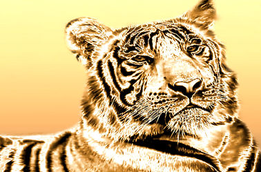 Tiger in Gold