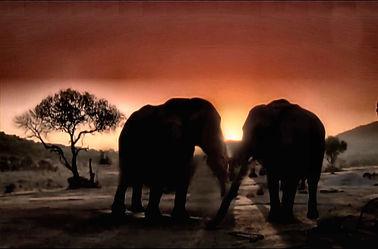 Elefanten in der Abenddämmerung