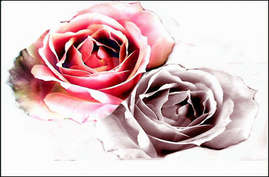 Bild mit Blumen, Rosen, Rosenblüte, Digital Art, Design, Rosenträume, Digitale Kunst, Digitale Blumen