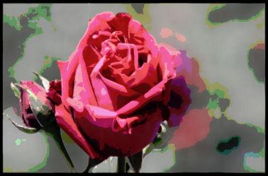 Bild mit Rosen, Rose, Makro Rose, Blumen im Makro, Blumenmakro