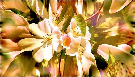 Kirschblüten Effect