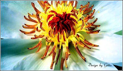 Makro Blüte 2
