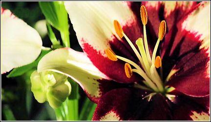 Bild mit Blumen, Blumen und Blüten, Blütenzauber, Blumen im Makro, Blumenmakro