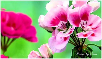 Blüte,Blüte