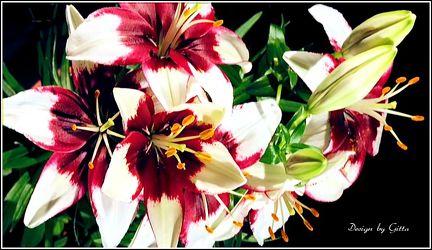 Bild mit Blumen, Blumen und Blüten, Blütenzauber, Blüten, Blumen im Makro, Blumenmakro