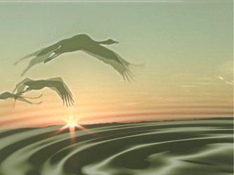 Bild mit Vögel, Bildercollagen, Stillleben & Collagen, Collagen, Digital Art, Collage, Digitale Tiere