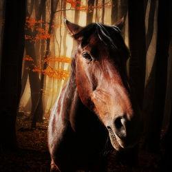 Bild mit Tiere, Pferde, Tier, Kinderbild, Kinderbilder, Pferd, reiten, Wildpferde, Pferdeliebe, pferdebilder, pferdebild