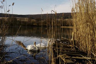 Bild mit Natur, Landschaften, Gewässer, Schwäne, boot, Boote, Landschaft, Steg, Holzsteg, See, Ruhe, schwan, Stille, Stege