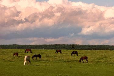 Bild mit Natur, Landschaften, Pferde, Landschaft, Kinderbild, Kinderbilder, Pferd, Herde, reiten, Koppel, Pferdekoppel, Pferdeliebe, pferdebilder, pferdebild