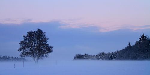 Bild mit Natur, Bäume, Winter, Schnee, Eis, Wald, Baum, Winterbilder, Kälte