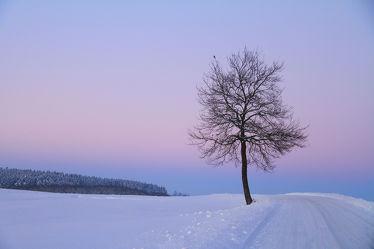 Bild mit Natur, Landschaften, Bäume, Winter, Schnee, Sonnenuntergang, Sonnenaufgang, Baum, Landschaft, Winterlandschaften, Winterbilder, Frost, Winterbild