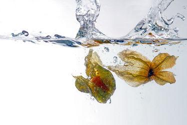Bild mit Wasser, Früchte, Essen, Unterwasser, Zitrusfrüchte, Frucht, Obst, GESUND, frisch, fruchtig, water, h2o, Vitamine, Ernährung, Physalis, gerhard albicker, Küche