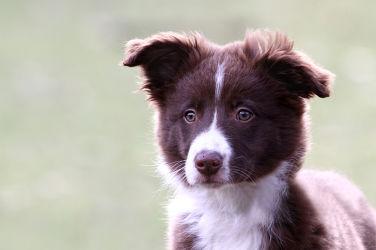 Bild mit Tiere, Natur, Hunde, Tier, Hund, Animal, Umwelt, Tierbild, Tierbilder