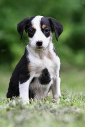 Bild mit Tiere, Natur, Hunde, Tier, Hund, Tierfotografie, Animal, Umwelt, Tierbild, Tierbilder, Tierfoto