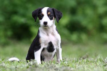 Bild mit Tiere, Natur, Hunde, Tier, Hund, Welpe, Tierfotografie, Animal, Umwelt, Welpen, Tierbild, Tierbilder, Tierfoto