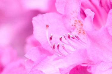 Bild mit Natur, Pflanzen, Blumen, Blume, Pflanze, Entspannung, Erholung, Umwelt