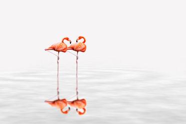 Bild mit Tiere, Natur, Vögel, Vögel, Tier, Tierfotografie, Animal, Wildlife, Umwelt, Tierbild, Tierbilder, Tierfoto, Flamingo, Flamingos