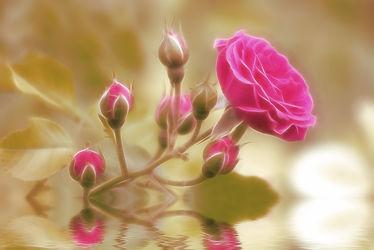 Bild mit Pflanzen, Blumen, Blume, Pflanze, Makro, romantik, Schönheit, Umwelt, Liebe