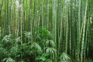 Bild mit Grün,Bambus,Tapete,Tapeten Muster,Harmonie in Grün,wandtapete,fototapete,bambuswald