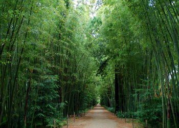 Bild mit Grün,Bambus,bamboo,Tapete,Tapeten Muster,Harmonie in Grün,wandtapete,fototapete,bambuswald,tunnel