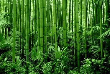 Bild mit Grün,Bambus,bamboo,Tapete,Tapeten Muster,Harmonie in Grün,wandtapete,fototapete,bambuswald