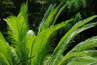 Bild mit Grün, Palmen, Palme, Tapete, Harmonie in Grün, wandtapete, fototapete, ruheraum, saunabereich, erfrischend, frisch, palmwedel