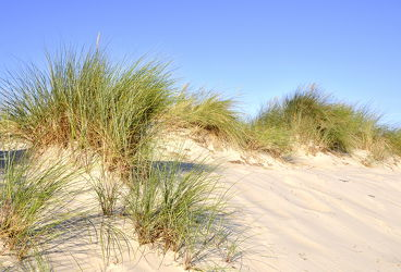 Bild mit Grün,Sand,Strand,Sandstrand,Ostsee,Dünen,Dünengras,Wellness,Strandhafer,Hell
