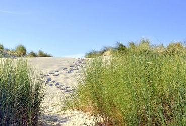 Bild mit Meere, Strände, Sand, Strand, Sandstrand, Ostsee, Meer, Düne, Dünen, Dünengras, Am Meer, Strandhafer, Spuren