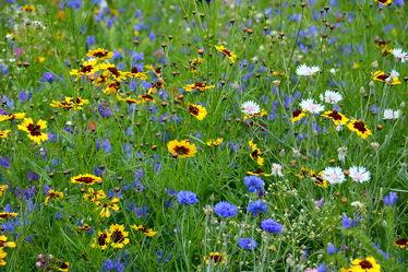 Bild mit Gelb,Gräser,Blau,Sommer,Gras,Wiese,Flowers,Bunt,wiesenblumen,wiesenblumen,Blüten,Tapete,Blumenwiesen,blüte,wandtapete,fototapete,farbenfroh,farbig,freundlich,sommerblumen,wiesenblume,sommerblumenwiese,blumenwiese,flower_field,sommerlich,tischdeckenmuster,natternkopf