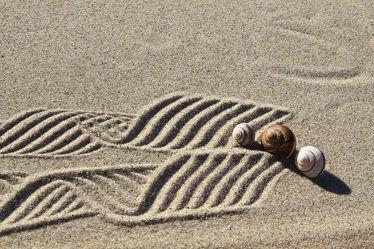Bild mit Strände, Sand, Schnecken, Strand, Sandstrand, Muschel, Muscheln, Schnecke, Stillleben, Wellness, schneckenhaus, Schneckenhäuser, Schalentiere, Sandstrände