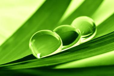 Bild mit Natur, Grün, Blätter, Makro, Gras, Blatt, Wassertropfen, Regentropfen, Tropfen, Wellness, Spa, Tau, Regen, Tautropfen