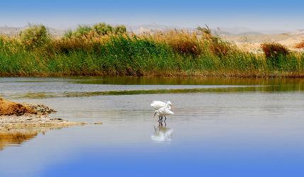 Bild mit Natur, Landschaften, Vögel