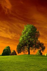 Bild mit Natur, Landschaften, Himmel, Bäume, Jahreszeiten, Herbst, Horizont, Sonne, Baum, Berlin, Blätter, Landschaft, Wiese, Park, Bunt, Idylle