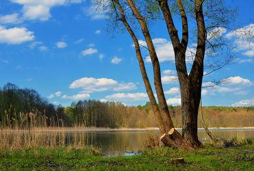 Bild mit Natur, Landschaften, Bäume, Seen, Baum, Landschaft, See