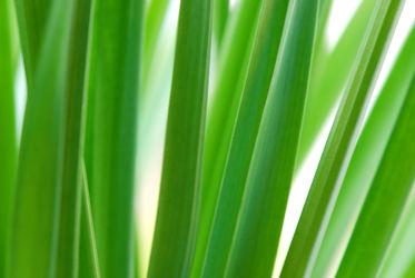 Bild mit Natur, Grün, Pflanzen, Frühling, Blätter, Pflanze, Gras, Blatt, Ruhe, Entspannung, Wellness, frisch