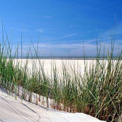 Bild mit Natur, Landschaften, Sand, Sandstrand, Ostsee, Meer, Landschaft, Düne, Dünen, Dünengras, Am Strand, Strandhafer